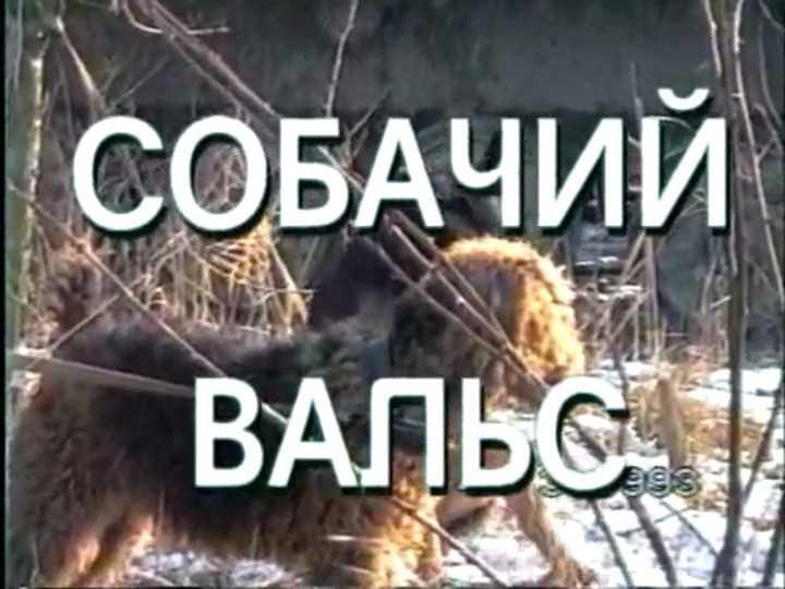 Собачий вальс. Фильм А.Сладкова