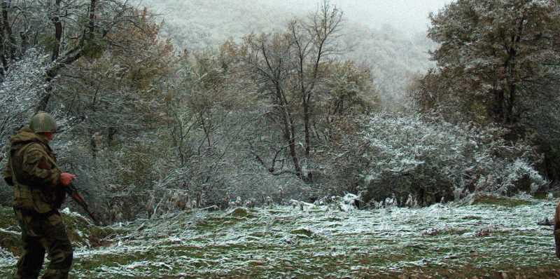 Лес неподалеку от места последнего боя 6-й роты